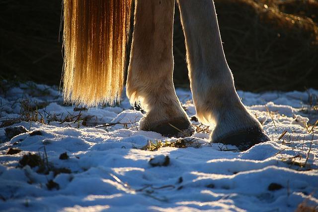 horse hoof photo