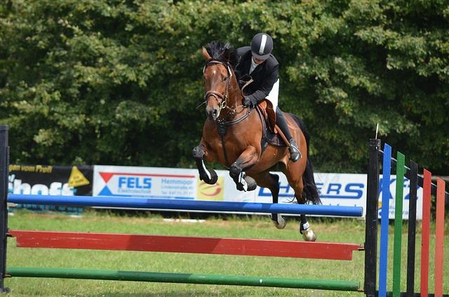 horse jumping photo