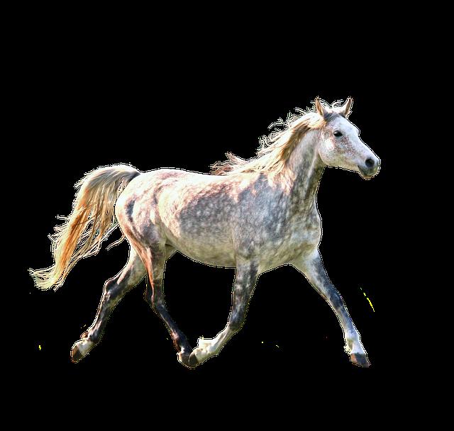running horse photo