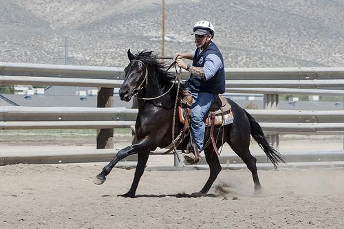 horse training photo