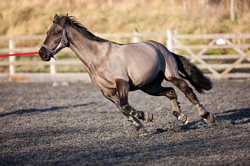 lunging photo