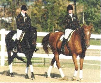 riding horses photo