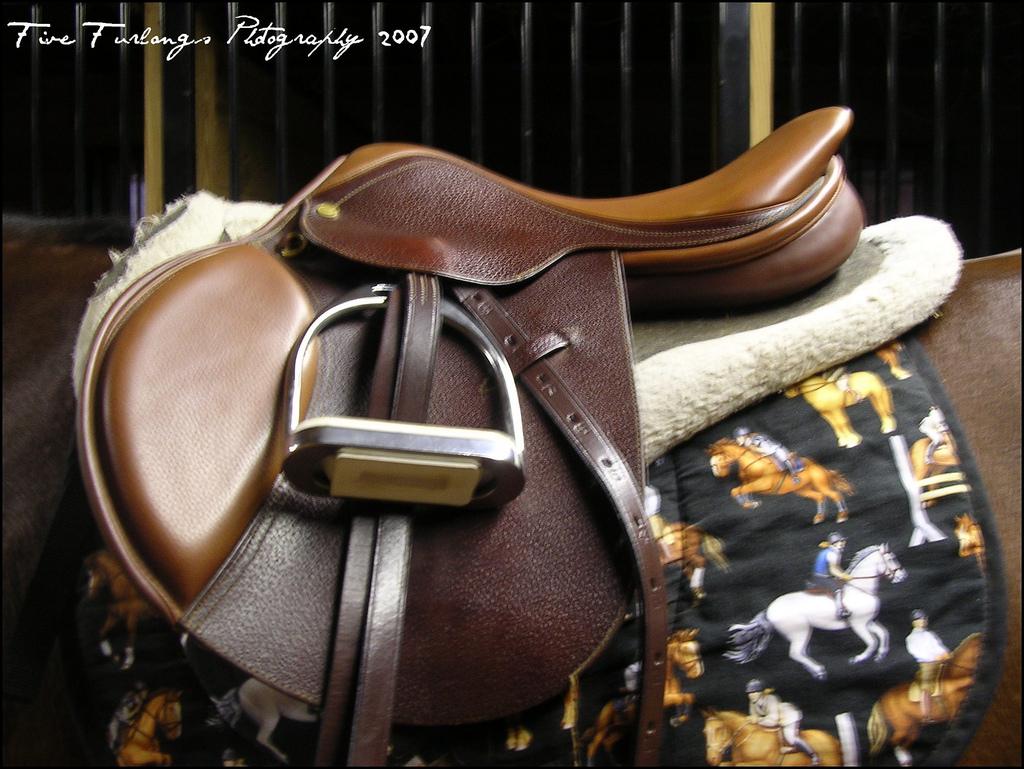 horse saddle photo