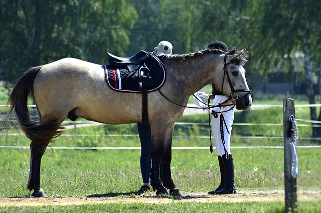 horse competition photo