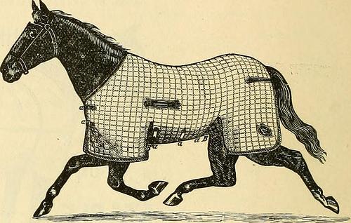 saddle blanket photo