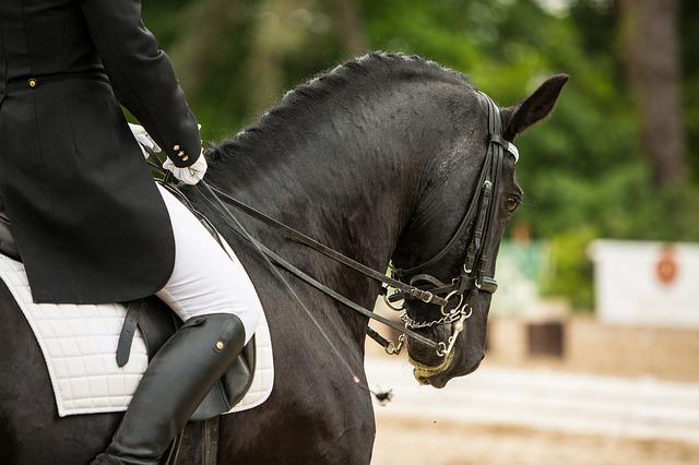 konie photo