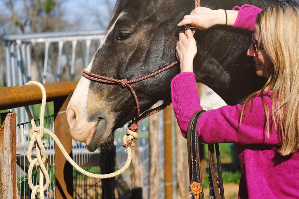 Koń w kantarze sznurkowym